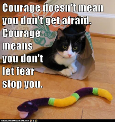 courage-cat